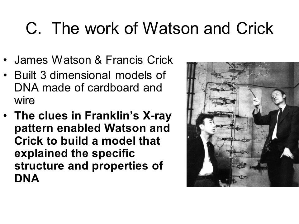 C. The work of Watson and Crick