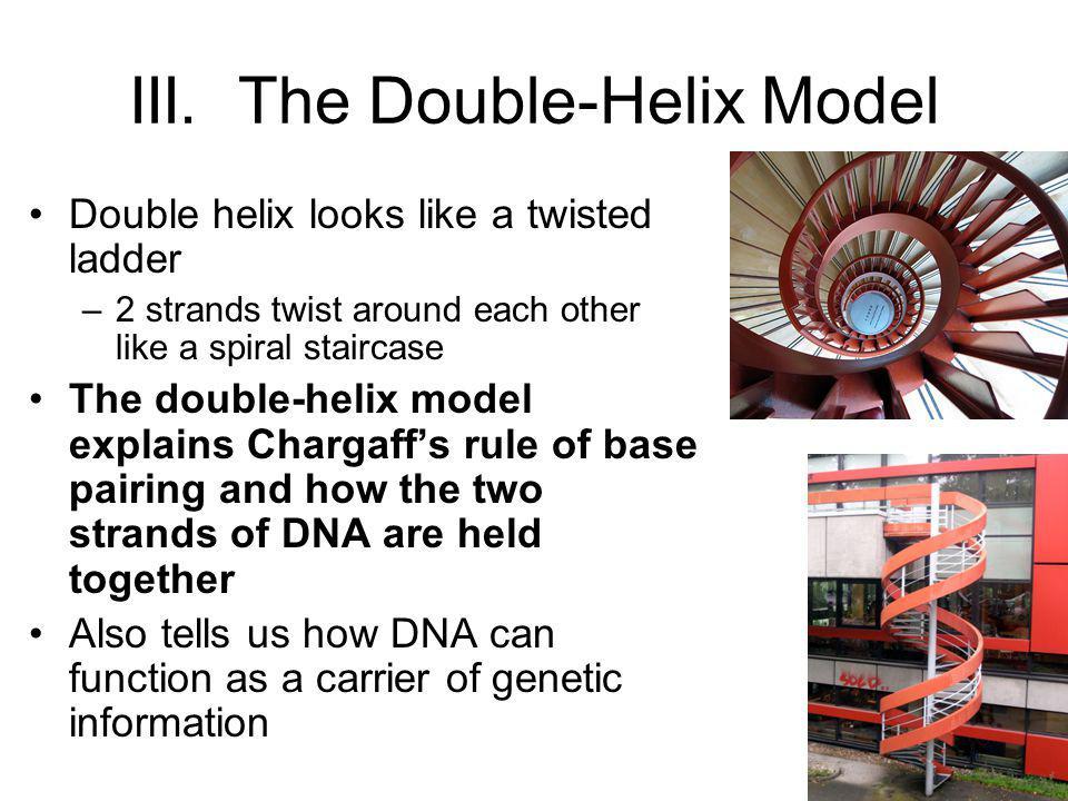 III. The Double-Helix Model
