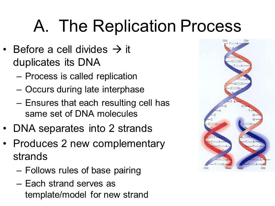 A. The Replication Process