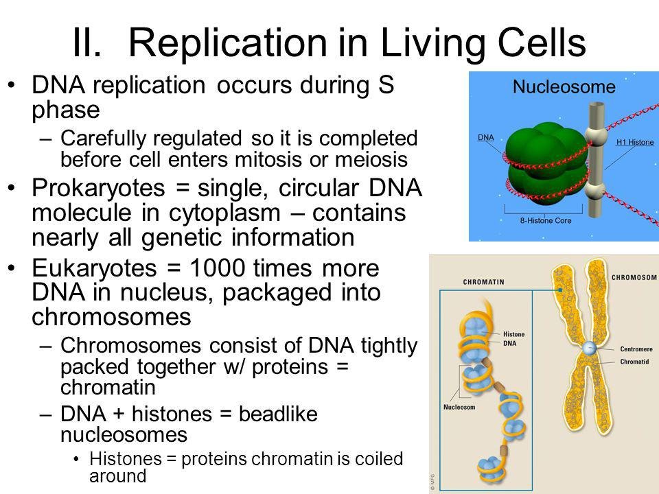 II. Replication in Living Cells
