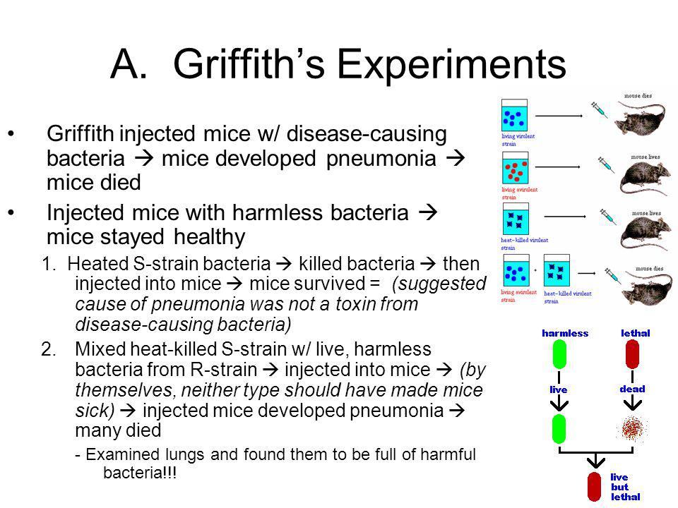 A. Griffith's Experiments