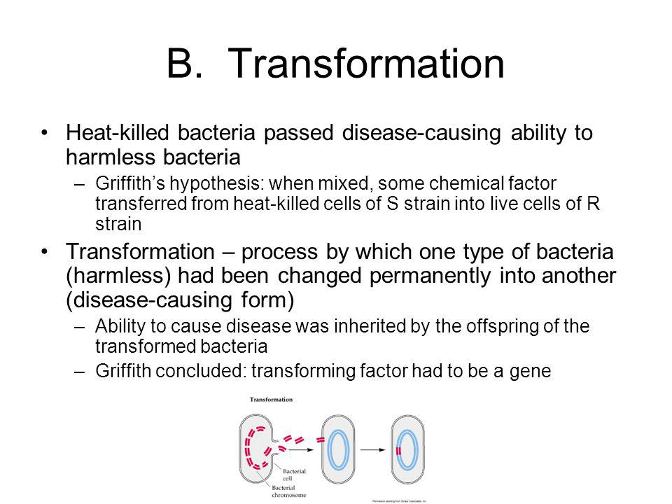 B. Transformation Heat-killed bacteria passed disease-causing ability to harmless bacteria.