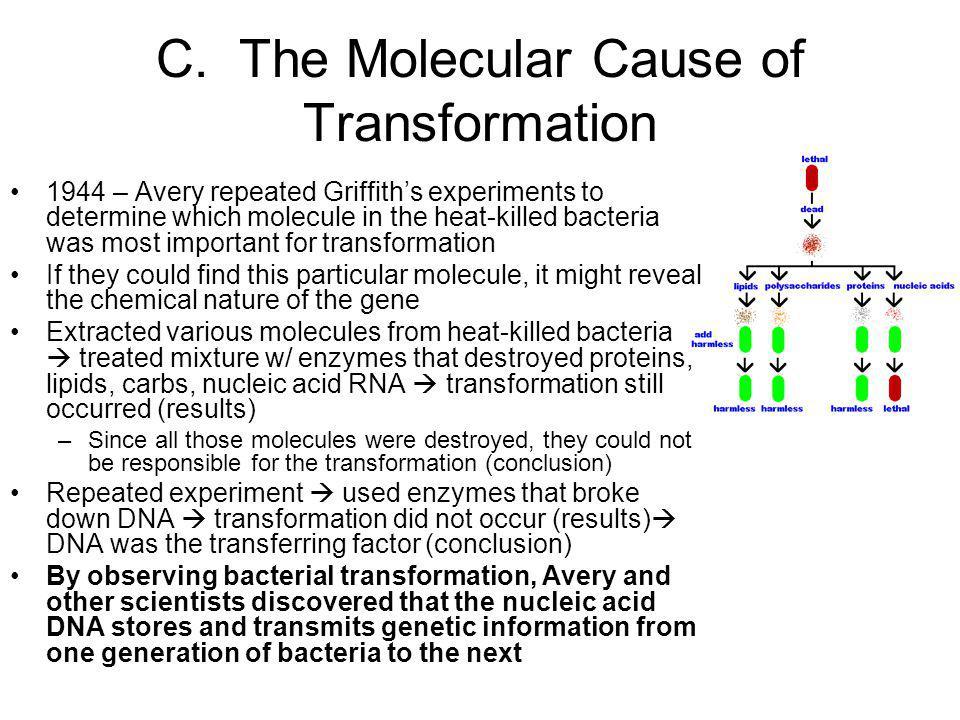 C. The Molecular Cause of Transformation