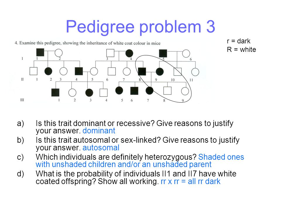 Pedigree problem 3 r = dark. R = white. Is this trait dominant or recessive Give reasons to justify your answer. dominant.