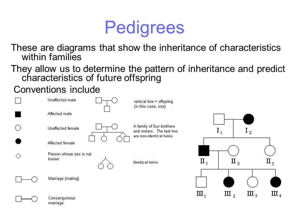 Pedigrees These are diagrams that show the inheritance of characteristics within families.