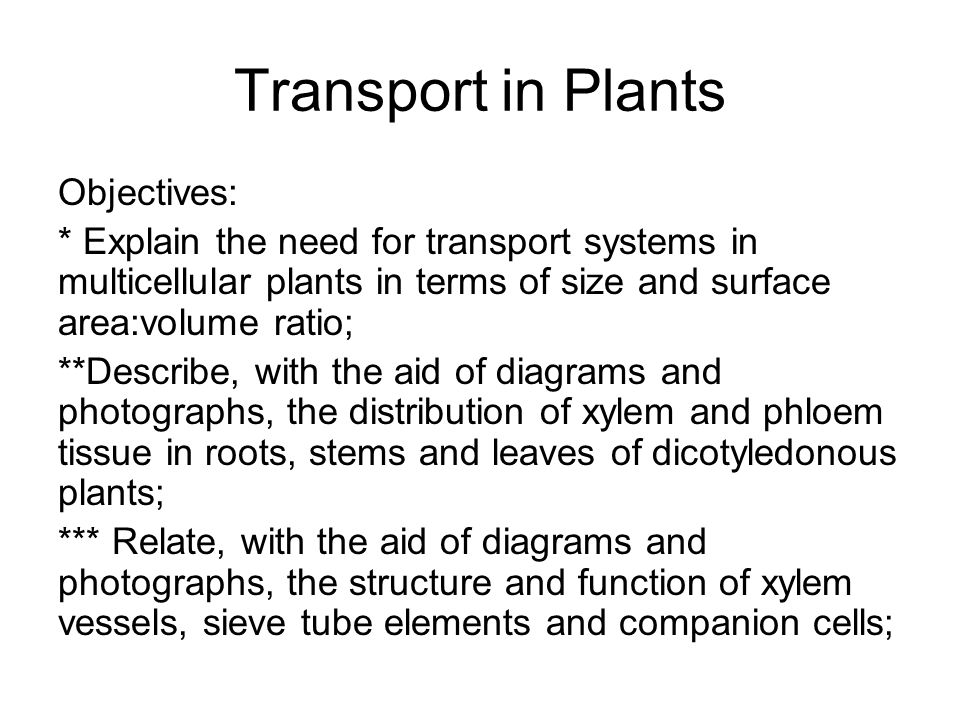 Transport in Plants Objectives: