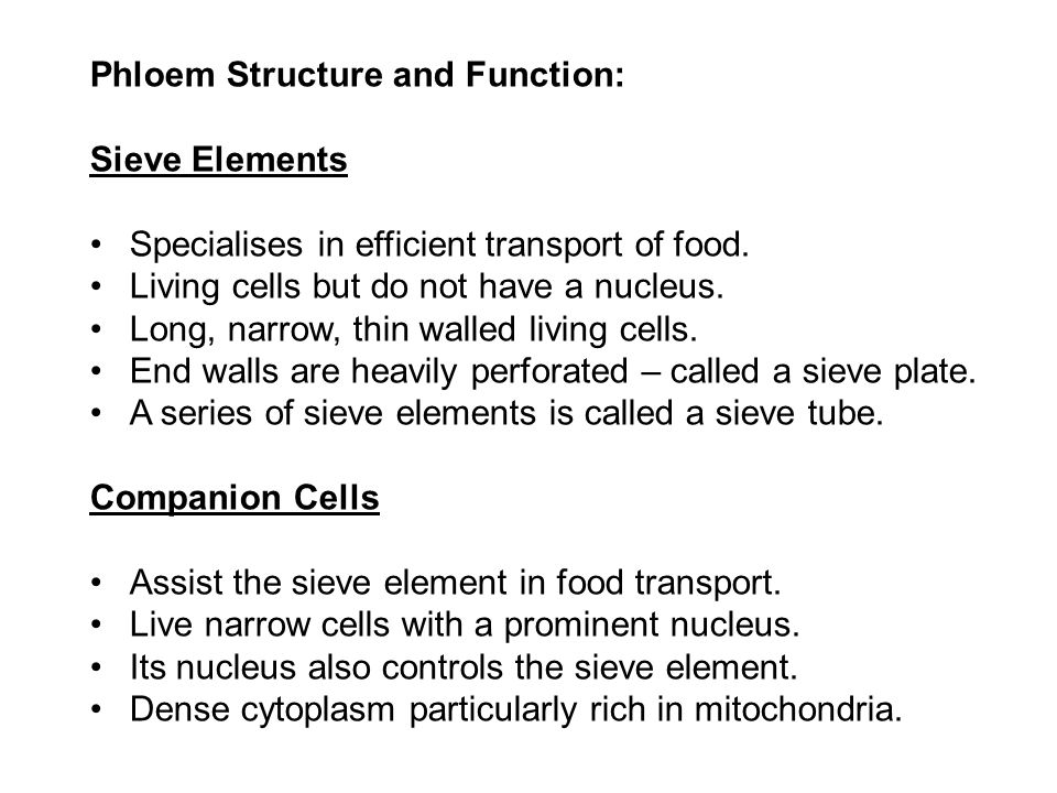 Phloem Structure and Function: