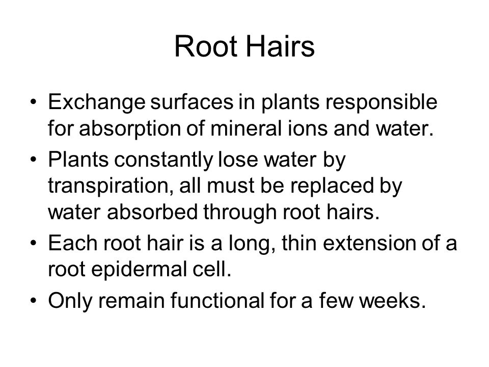 Root Hairs Exchange surfaces in plants responsible for absorption of mineral ions and water.