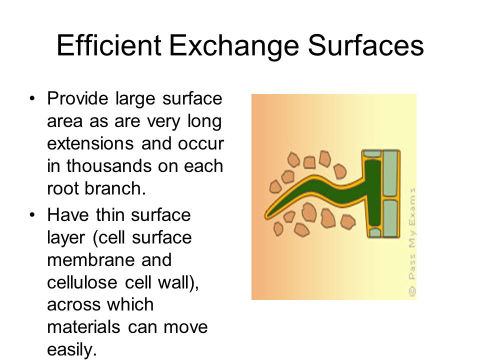Efficient Exchange Surfaces