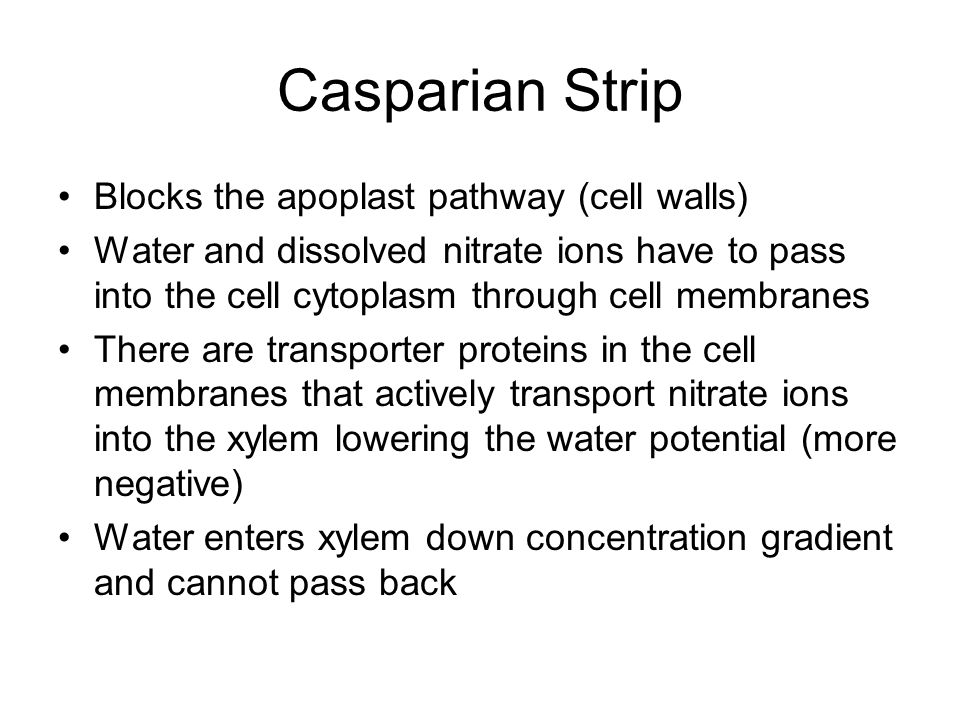 Casparian Strip Blocks the apoplast pathway (cell walls)