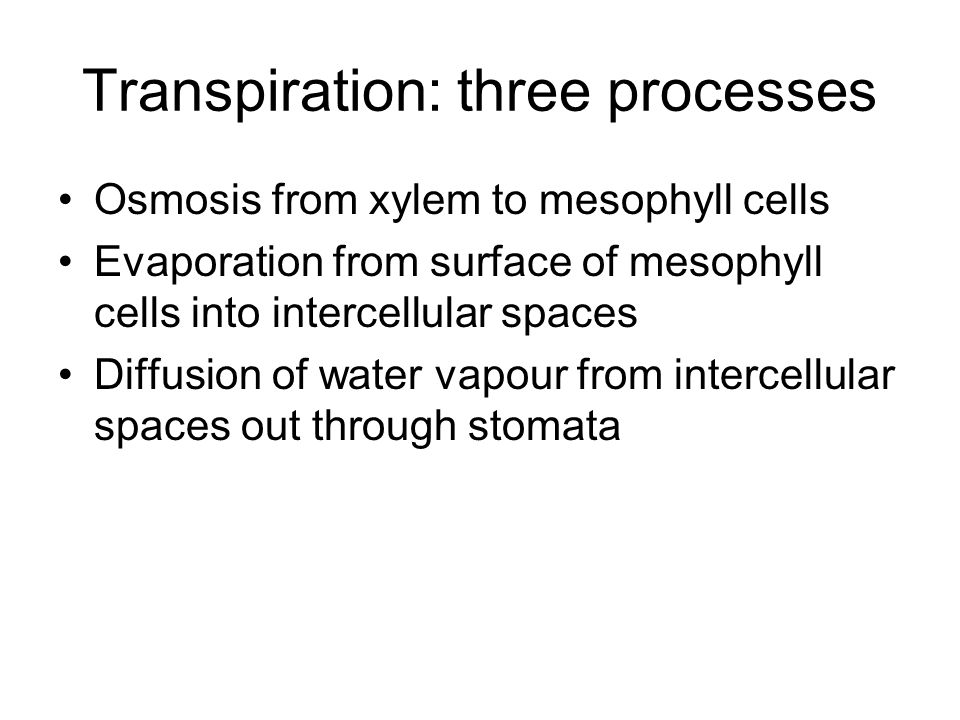 Transpiration: three processes