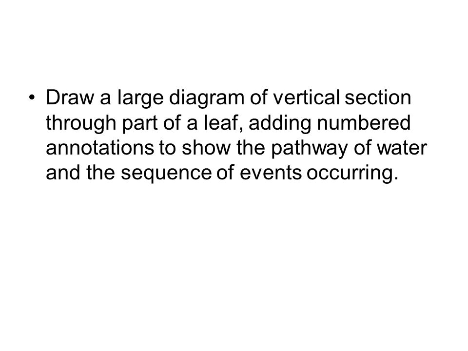 Draw a large diagram of vertical section through part of a leaf, adding numbered annotations to show the pathway of water and the sequence of events occurring.