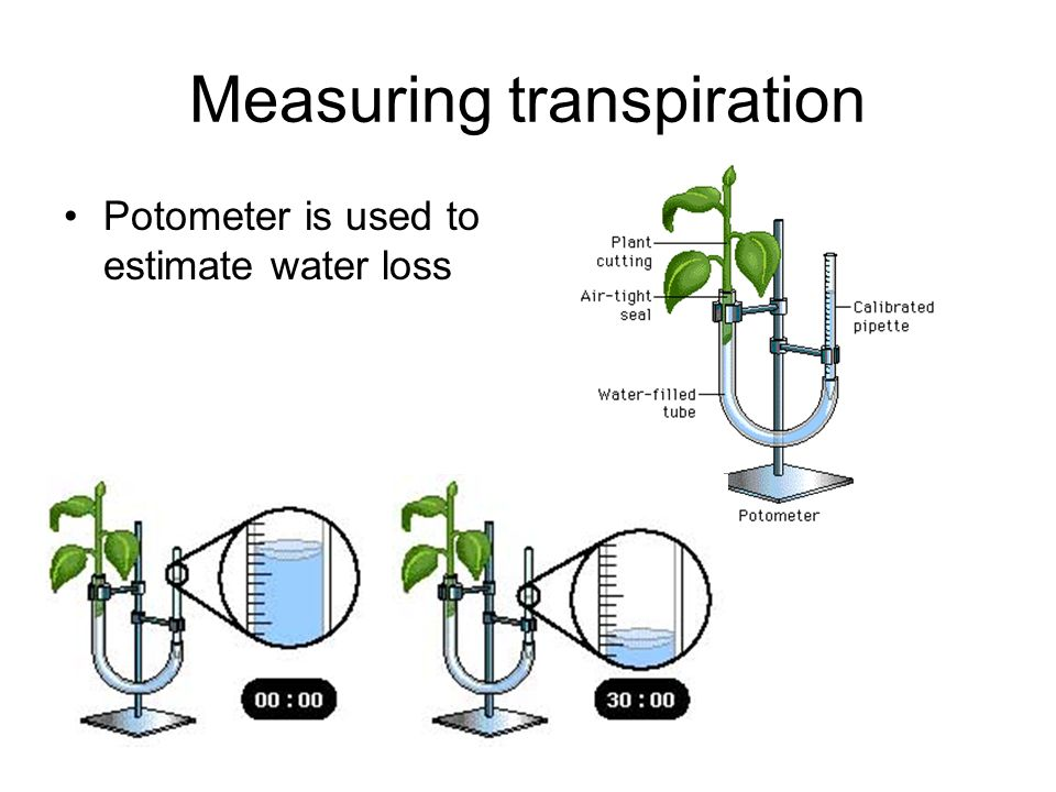 Measuring transpiration