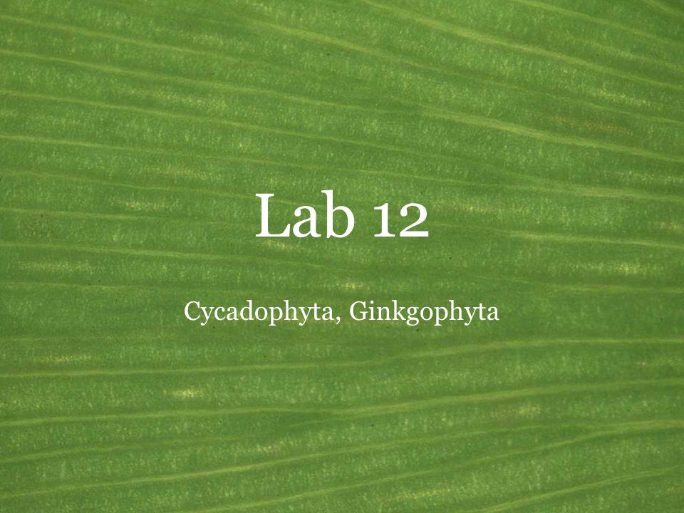 Cycadophyta, Ginkgophyta