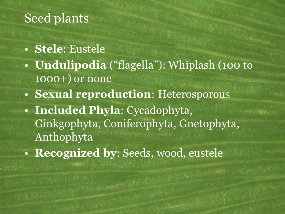 Seed plants Stele: Eustele