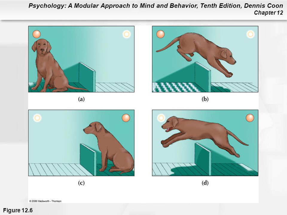 Figure 12.6 In the normal course of escape and avoidance learning, a light dims shortly before the floor is electrified (a). Since the light does not yet have meaning for the dog, the dog receives a shock (non-injurious, by the way) and leaps the barrier (b). Dogs soon learn to watch for the dimming of the light (c) and to jump before receiving a shock (d). Dogs made to feel helpless rarely even learn to escape shock, much less to avoid it.