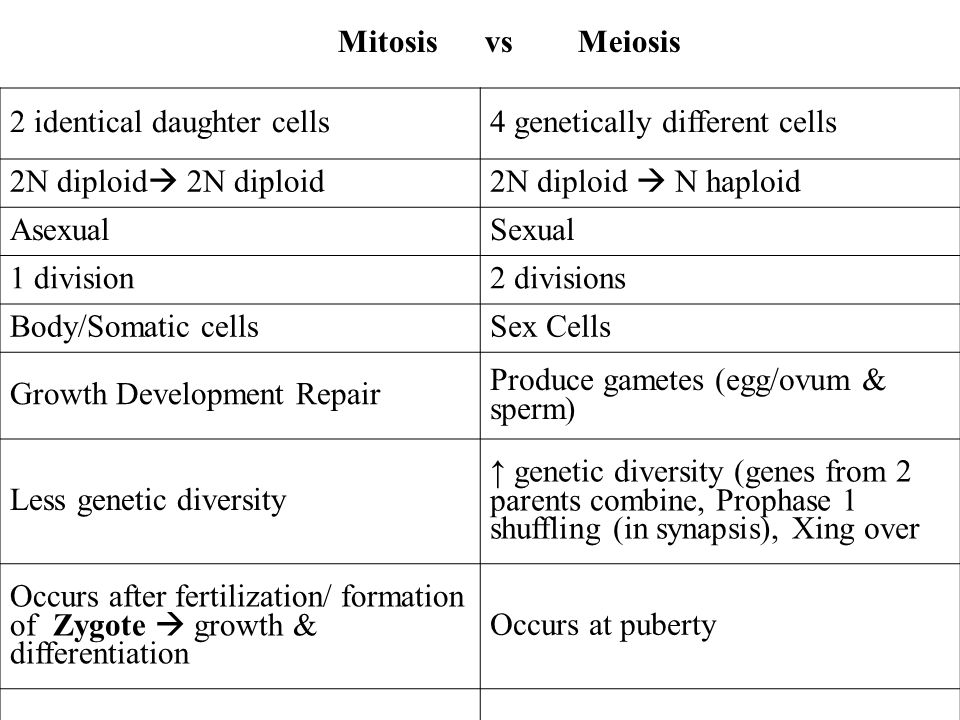 Mitosis vs Meiosis 2 identical daughter cells. 4 genetically different cells. 2N diploid 2N diploid.