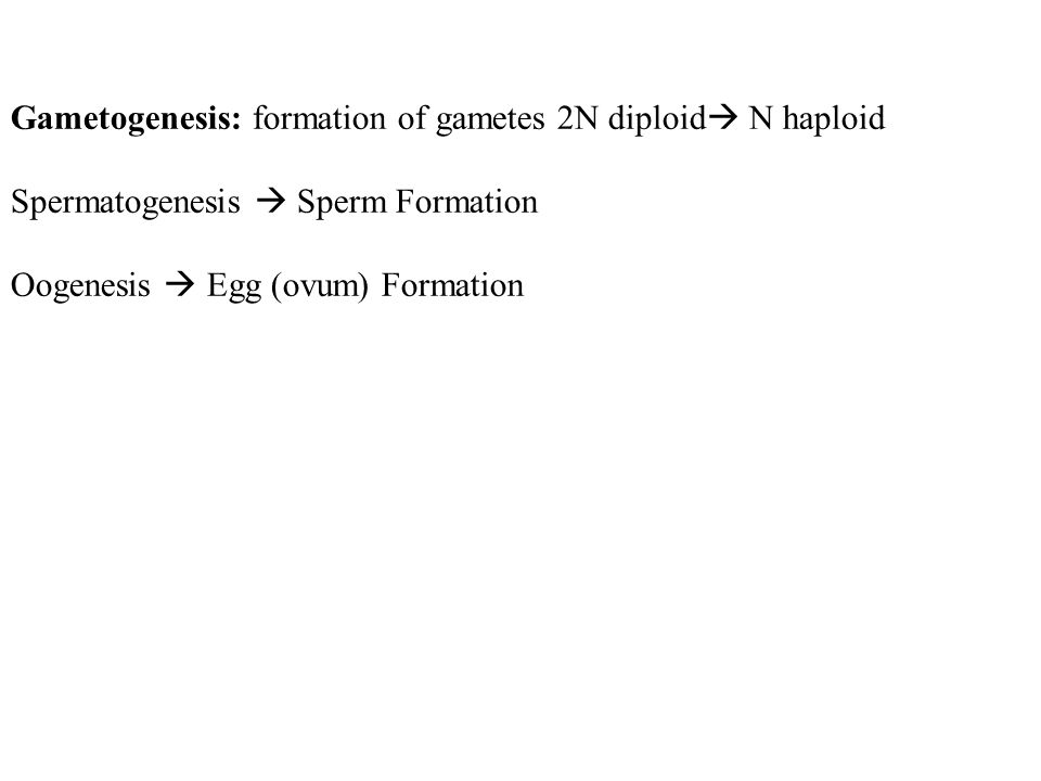 Gametogenesis: formation of gametes 2N diploid N haploid