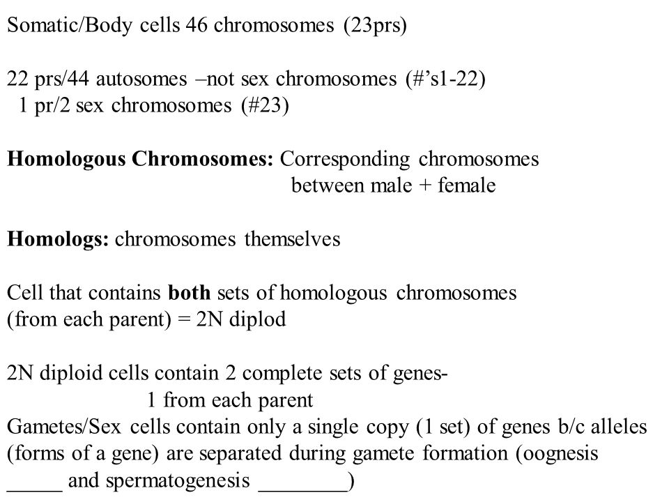 Somatic/Body cells 46 chromosomes (23prs)