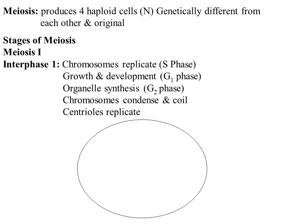 Meiosis: produces 4 haploid cells (N) Genetically different from