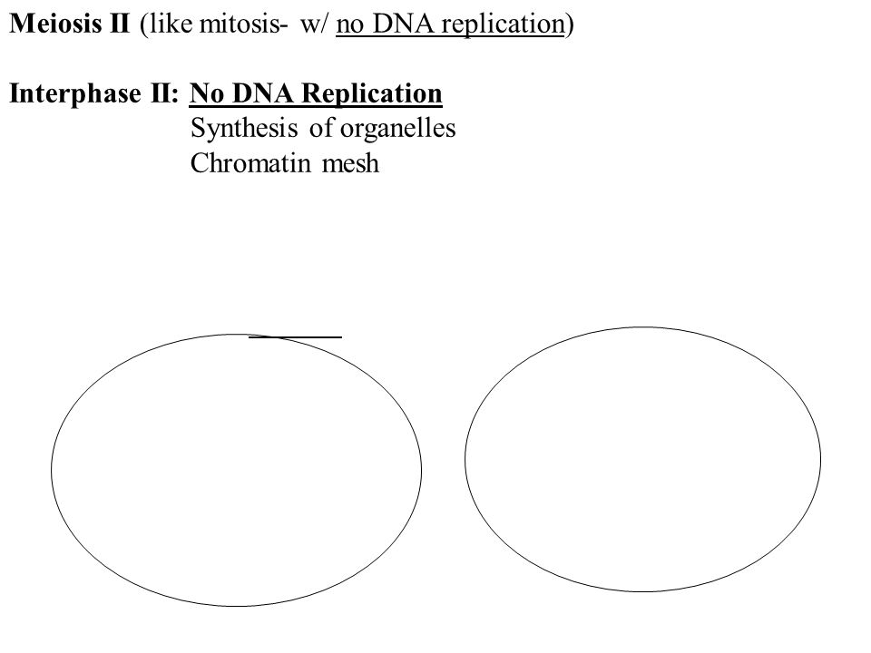 Meiosis II (like mitosis- w/ no DNA replication)