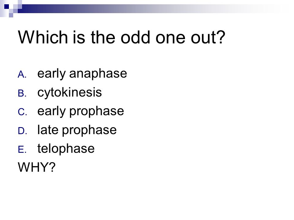 Which is the odd one out early anaphase cytokinesis early prophase