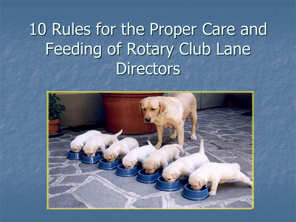 10 Rules for the Proper Care and Feeding of Rotary Club Lane Directors