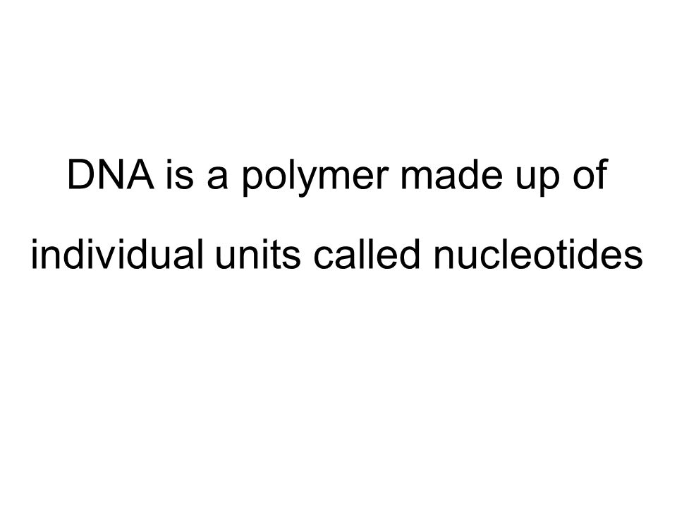 DNA is a polymer made up of individual units called nucleotides