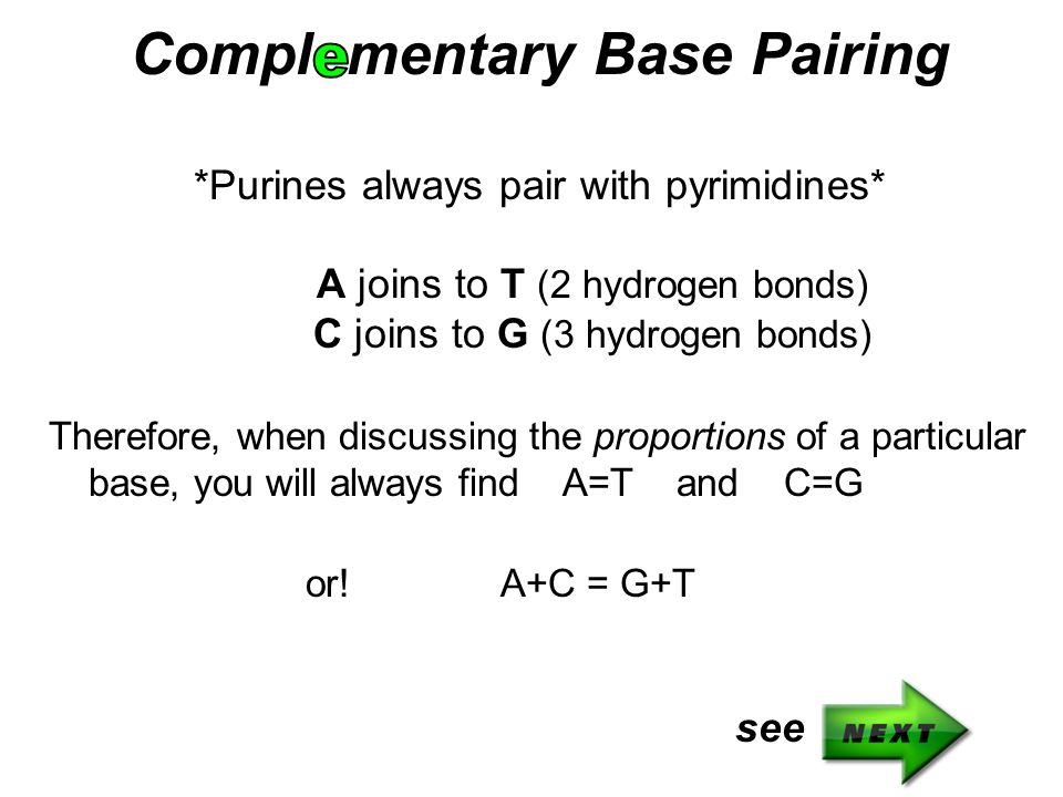 Compl mentary Base Pairing