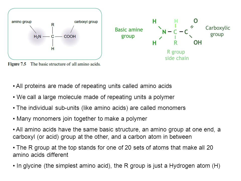 All proteins are made of repeating units called amino acids