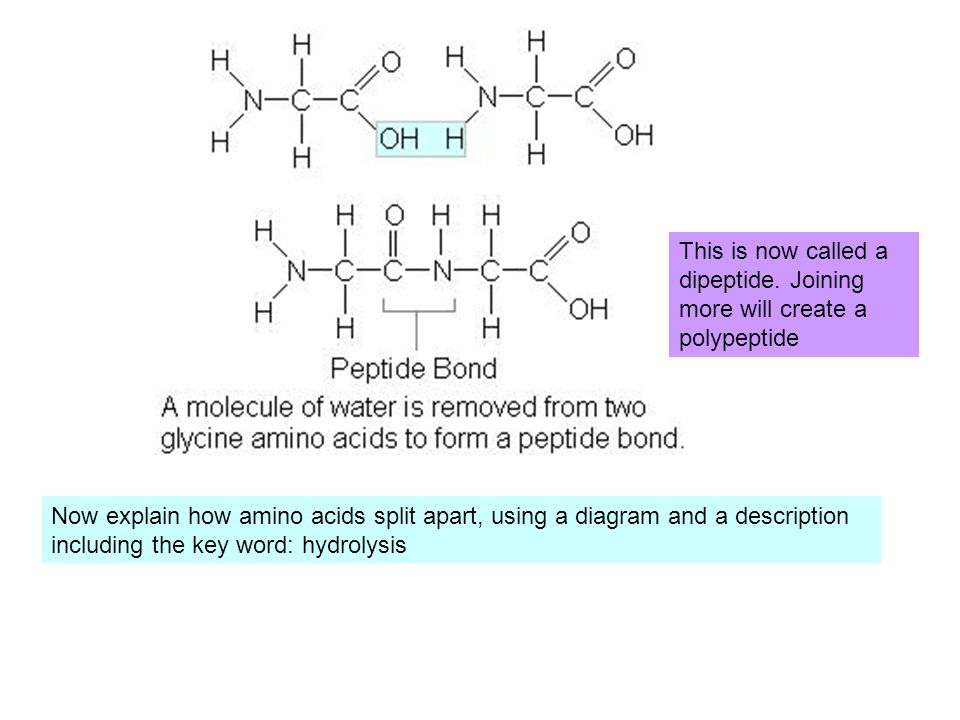 This is now called a dipeptide. Joining more will create a polypeptide