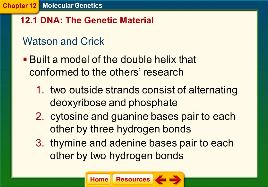 two outside strands consist of alternating deoxyribose and phosphate