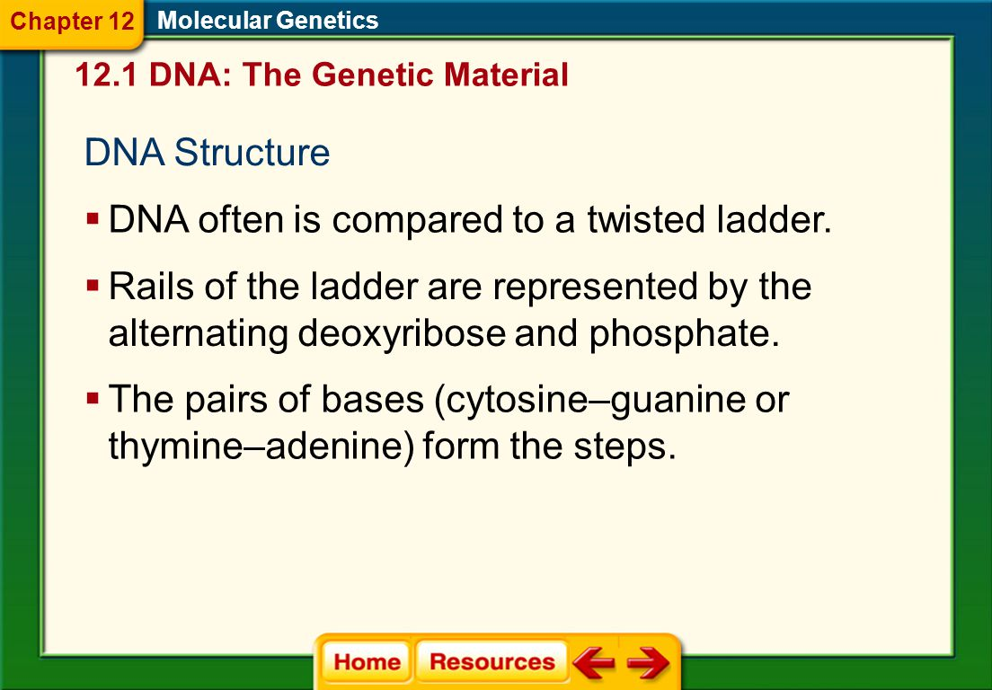 DNA often is compared to a twisted ladder.