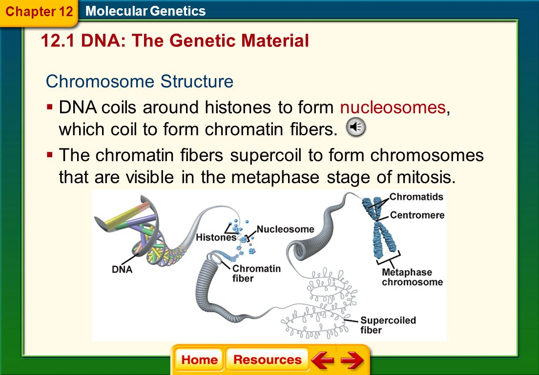 12.1 DNA: The Genetic Material