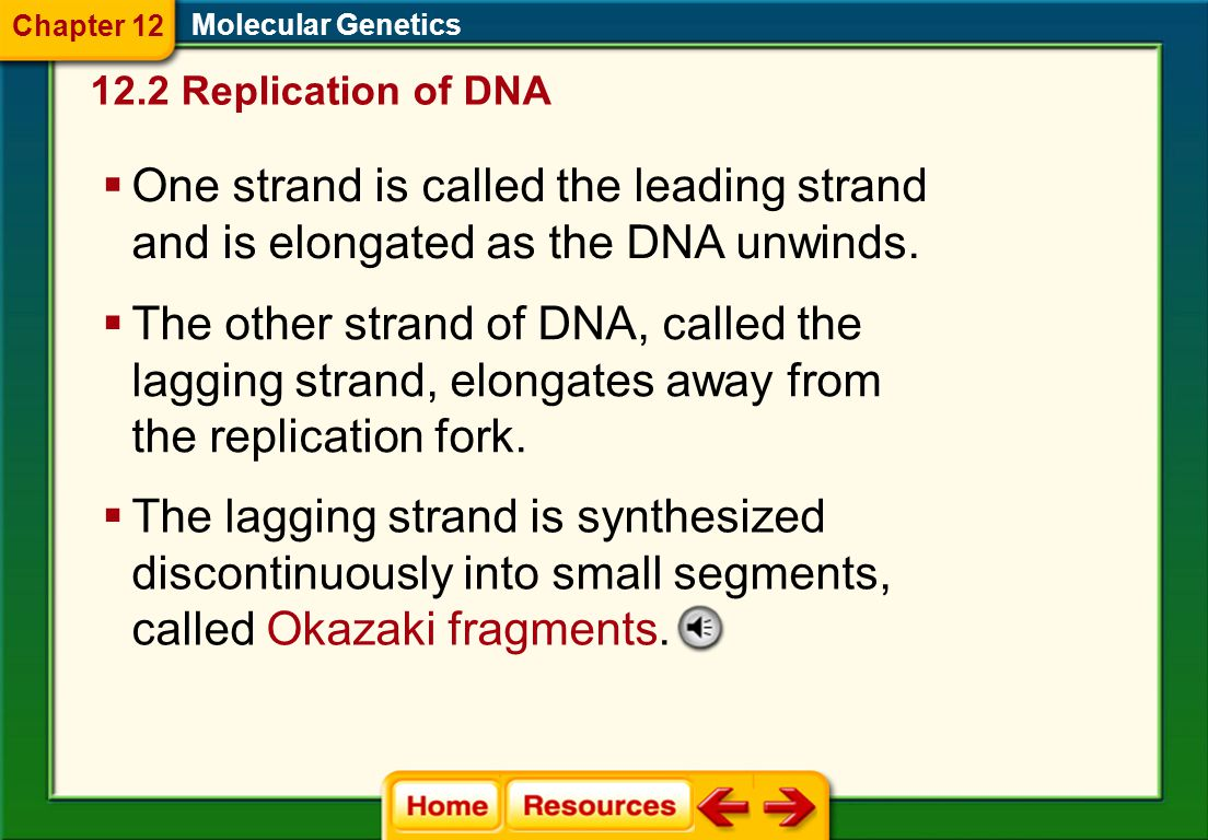 Chapter 12 Molecular Genetics. 12.2 Replication of DNA. One strand is called the leading strand and is elongated as the DNA unwinds.