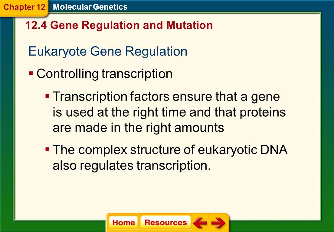 Eukaryote Gene Regulation