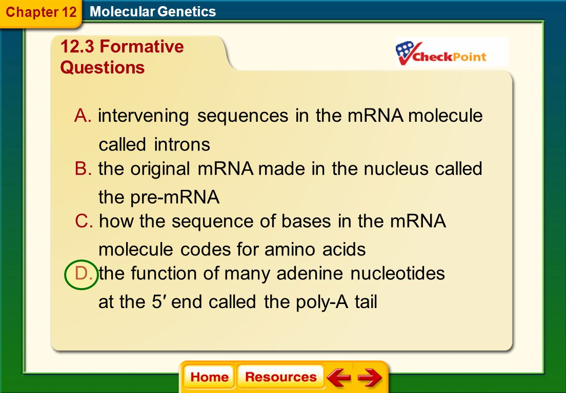 intervening sequences in the mRNA molecule
