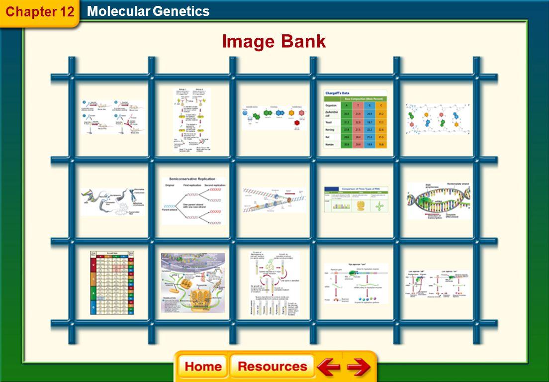 Chapter 12 Molecular Genetics Image Bank