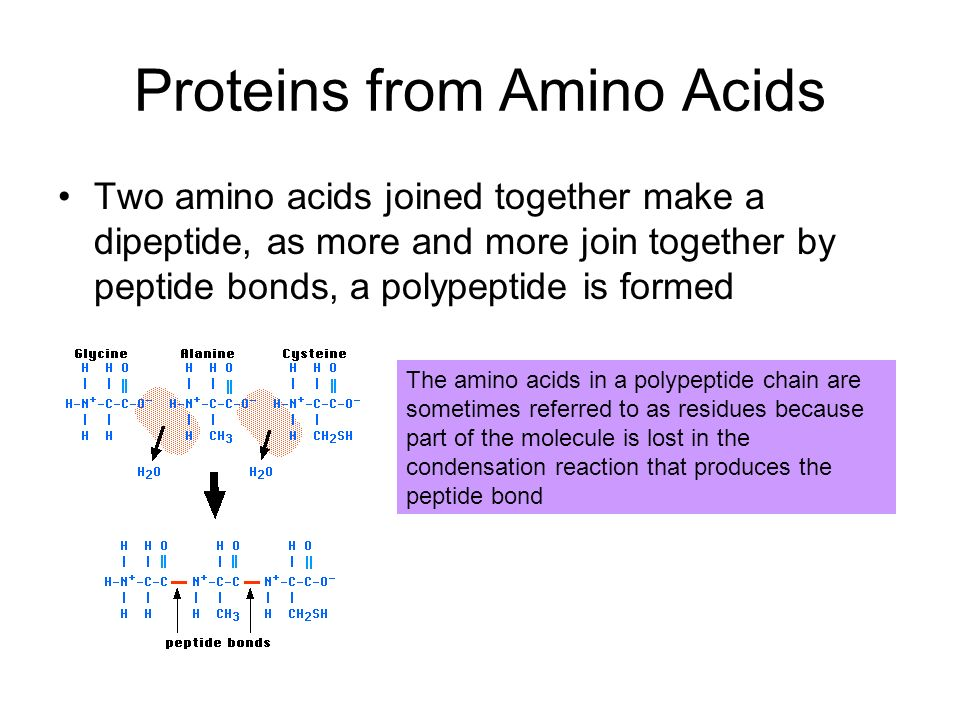Proteins from Amino Acids