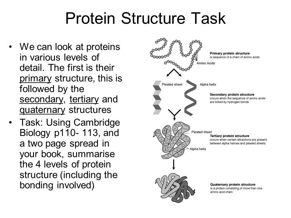 Protein Structure Task