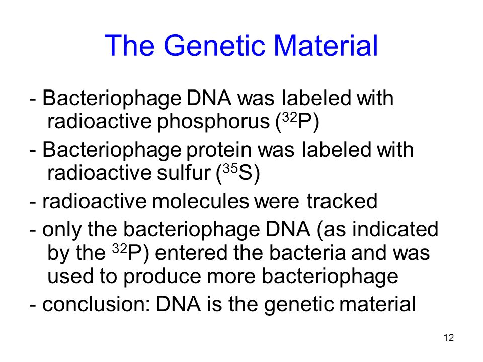 The Genetic Material - Bacteriophage DNA was labeled with radioactive phosphorus (32P)