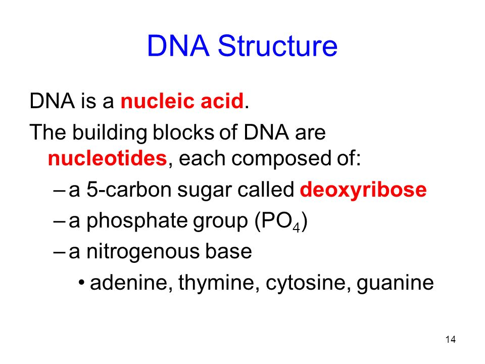 DNA Structure DNA is a nucleic acid.