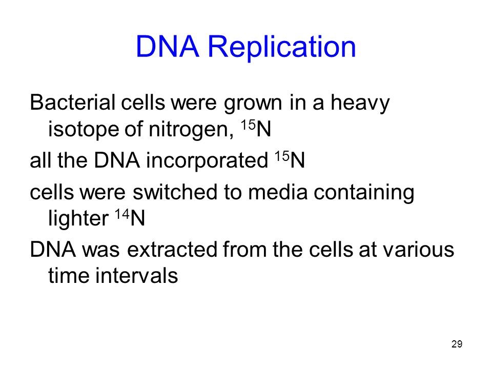 DNA Replication Bacterial cells were grown in a heavy isotope of nitrogen, 15N. all the DNA incorporated 15N.