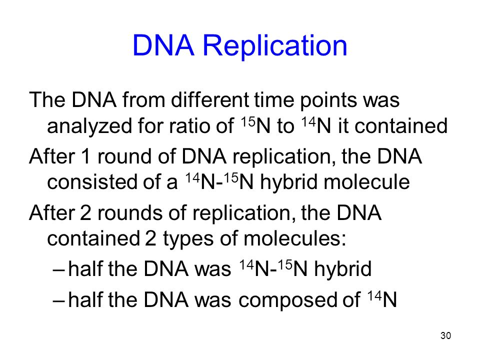 DNA Replication The DNA from different time points was analyzed for ratio of 15N to 14N it contained.