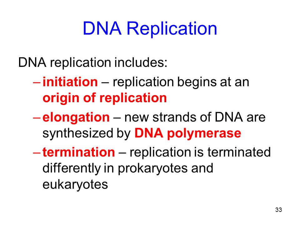 DNA Replication DNA replication includes: