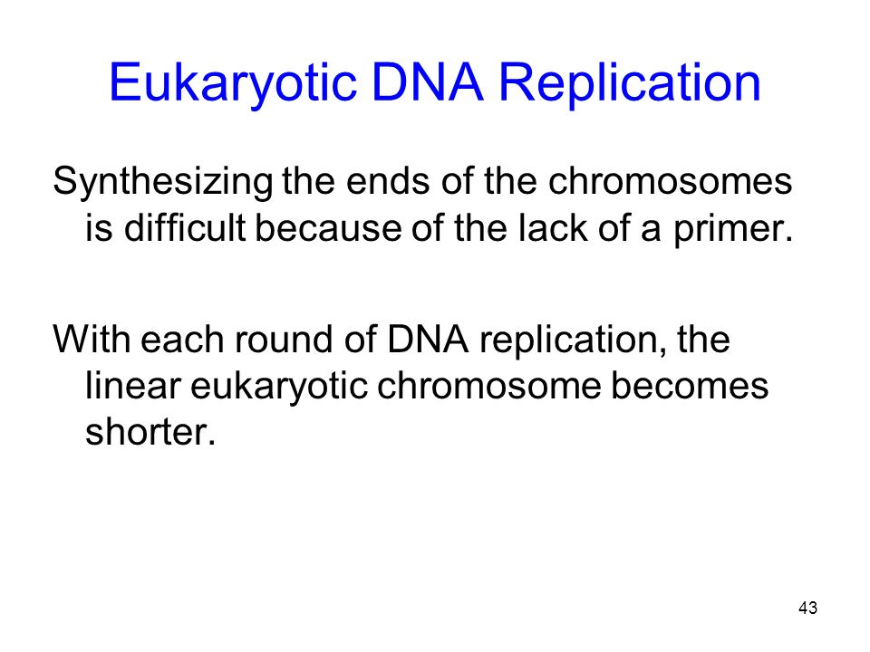 Eukaryotic DNA Replication