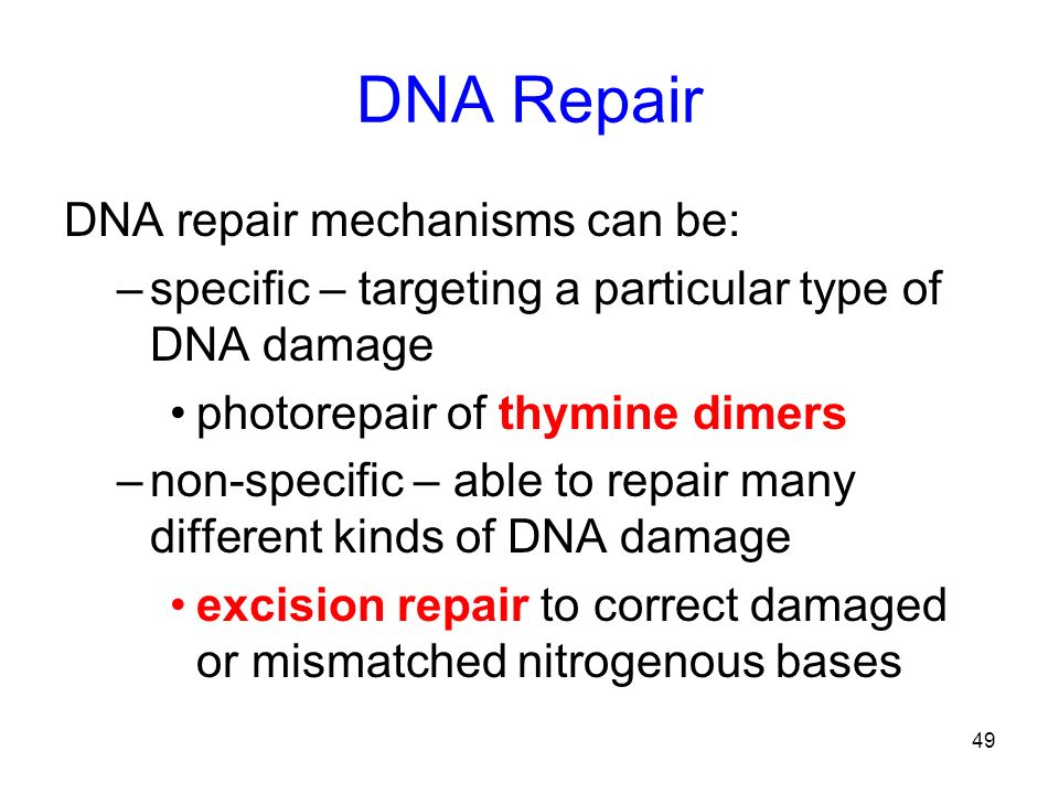 DNA Repair DNA repair mechanisms can be: