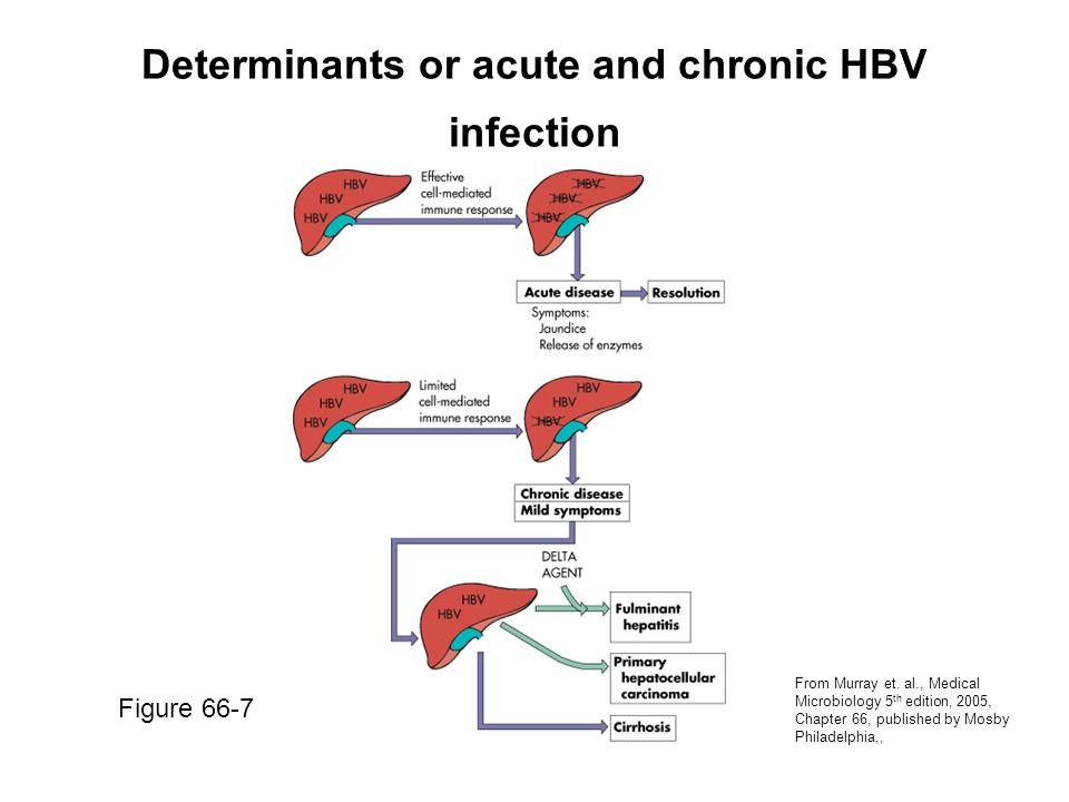 Determinants or acute and chronic HBV infection