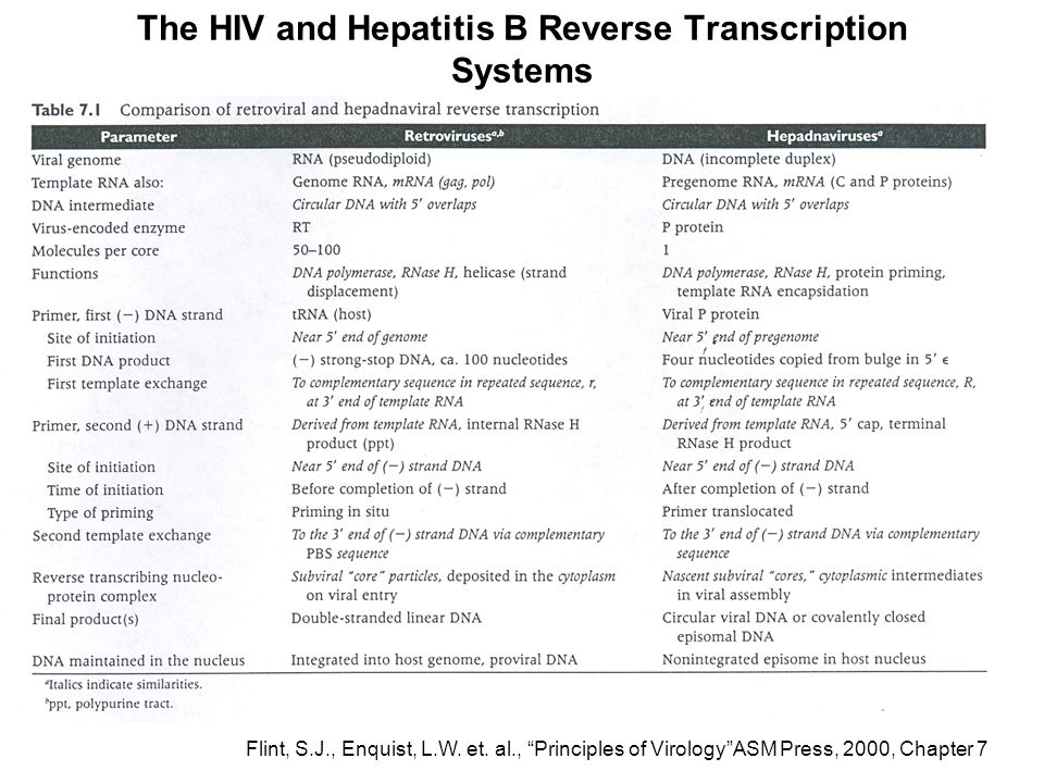 The HIV and Hepatitis B Reverse Transcription Systems