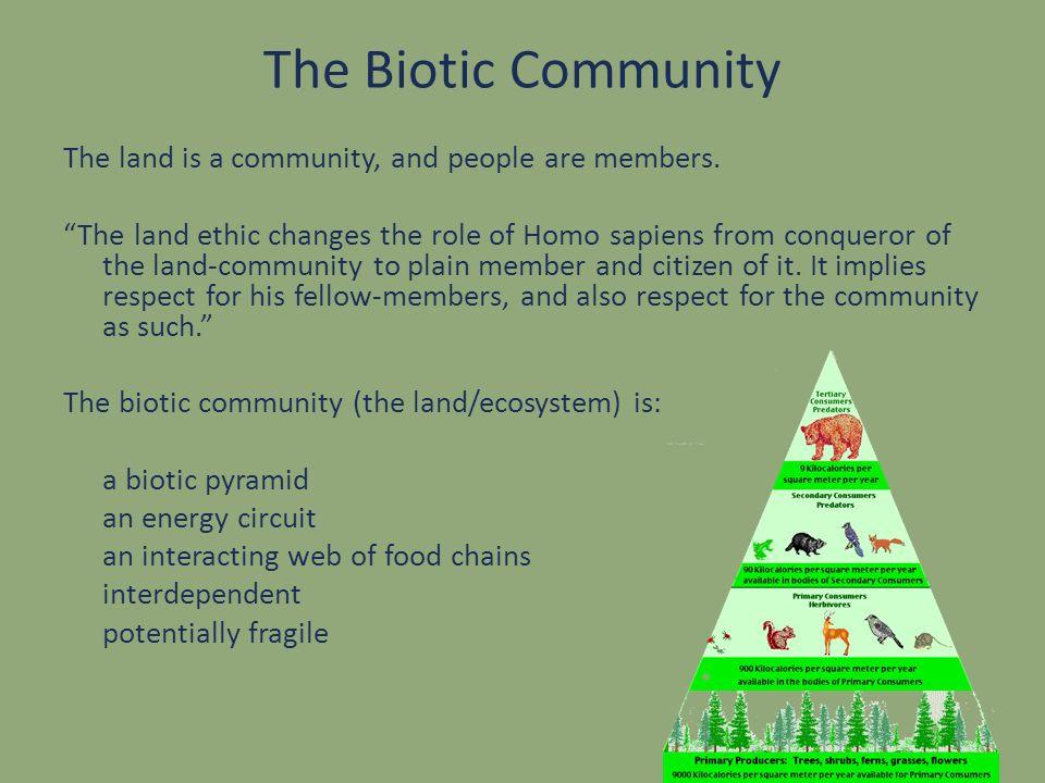 The Biotic Community